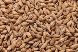 The_Hoppy_Brewer_Best Malz Acidulated Malt