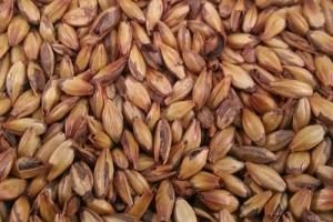 The_Hoppy_Brewer_Briess 120L Crystal Malt