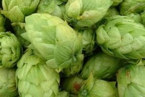The_Hoppy_Brewer_Chinook