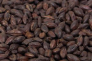 The_Hoppy_Brewer_Briess Black Barley