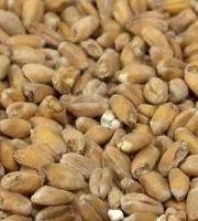 The_Hoppy_Brewer_German Dark Wheat
