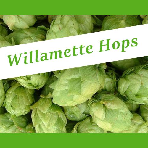 The_Hoppy_Brewer_Willamette_hops