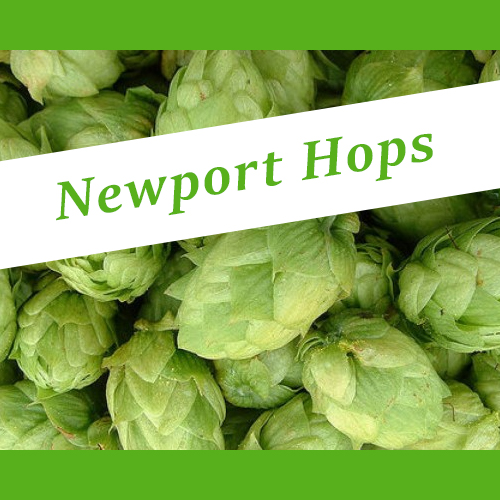 the_hoppy_brewer_newport_hops