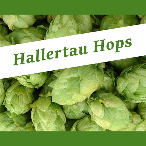 The_Hoppy_Brewer_Hallertau_hops