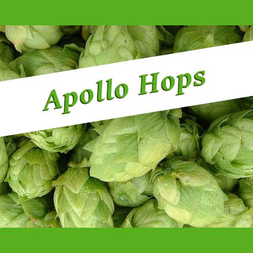The_Hoppy_Brewer_Apollo_Hops