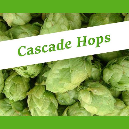 The_Hoppy_Brewer_Cascade_hops