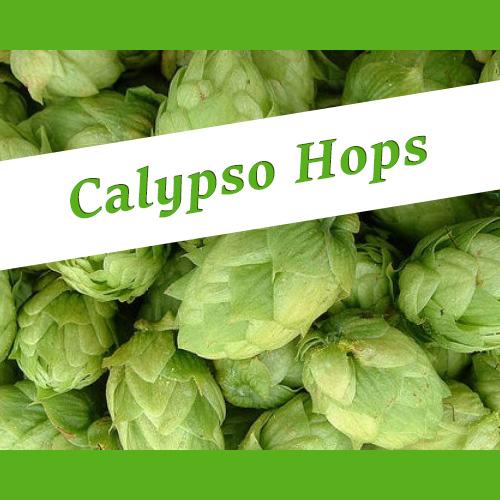 The_Hoppy_Brewer_Calypso Hops