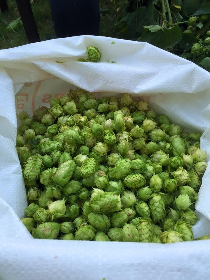 Krauski'sBrewskis Gresham OR Hoppy Brewer